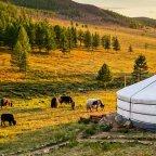 Ger: El universo de la yurta mongol