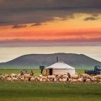 Sobre la expresión de la pluralidad en mongol