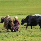 Recursos sobre la situación de la mujer en Mongolia